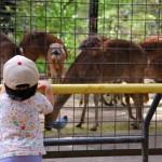 ☆動物園へ行くなら、午前・午後のどっちがおすすめ?
