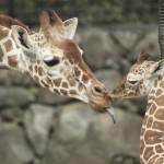 ☆動物園・水族館の動物の見どころを教えて!